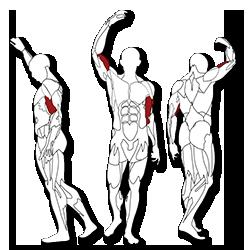 BH fitness Tr series bicepsz edzés