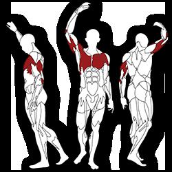 BH fitness Tr series Váll-mell edzés